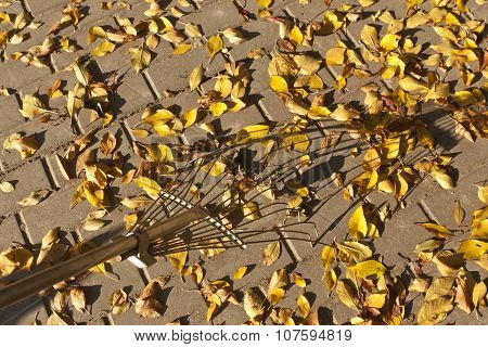 Rake And Fallen Leaves On Pavement.