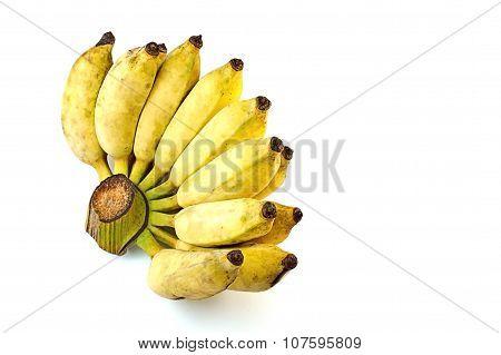 Pisang Awak Banana On White Background