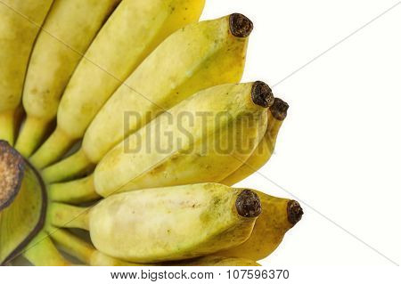 Cultivate Banana Isolate White Background