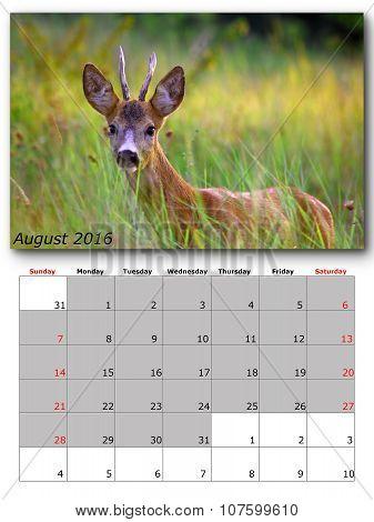 Wildlife Calendar August 2016