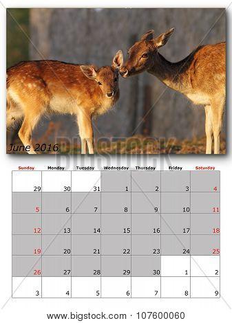 Wildlife Calendar June 2016