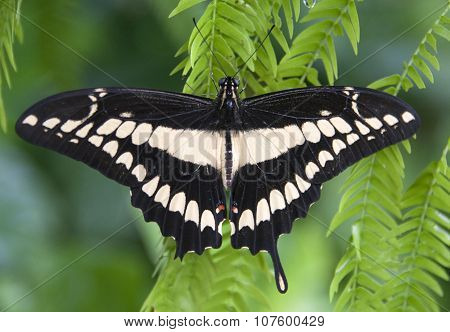 Close up photo of a butterfly in a butterfly garden