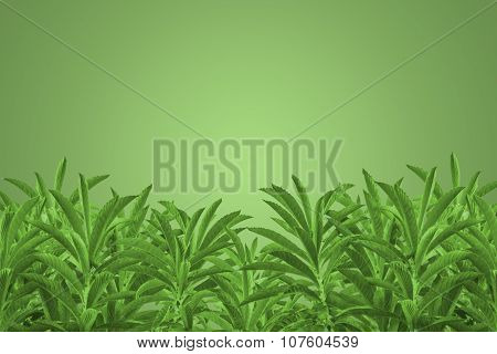 Tree Plants Background