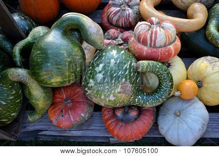 atypical shapes of pumpkins