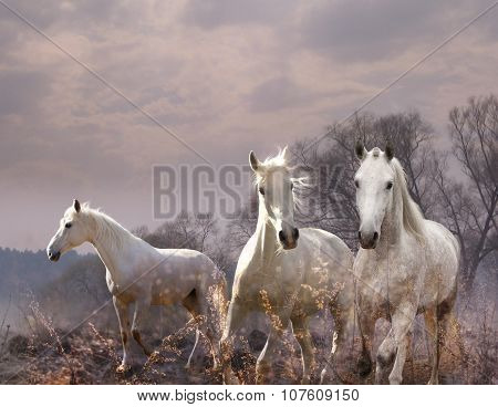 White horse in a purple haze