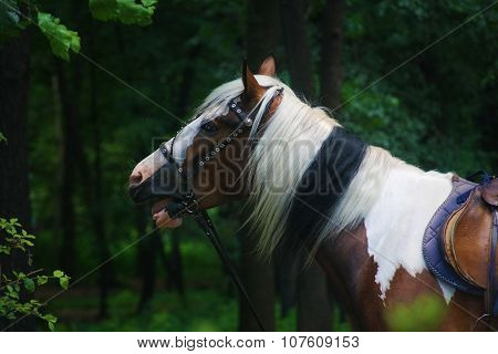 Spotted Pony in a mysterious forest