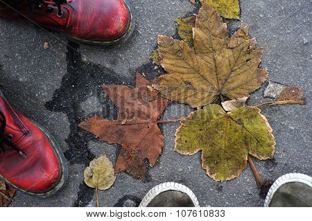pair of foot shoes on a background asphalt and leaves