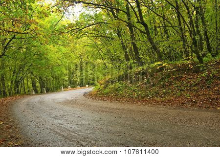 Asphalt Road In Autumn Forest.