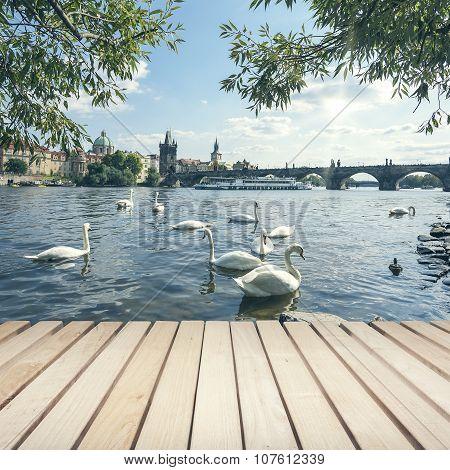 Charles bridge and Swans.