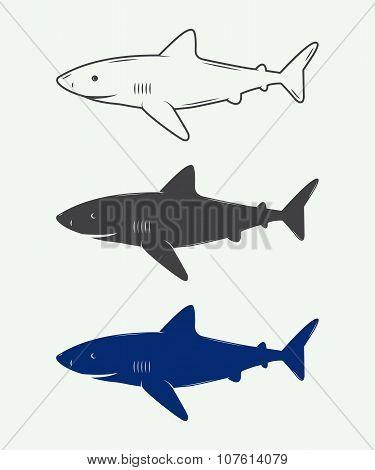 Set Of Vintage Sharks For Logos, Emblems And Badges. Vector Illustration