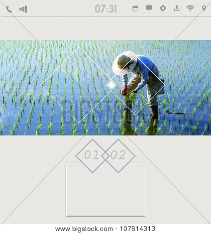 Display Japanese farmer tending the rice paddy Concept