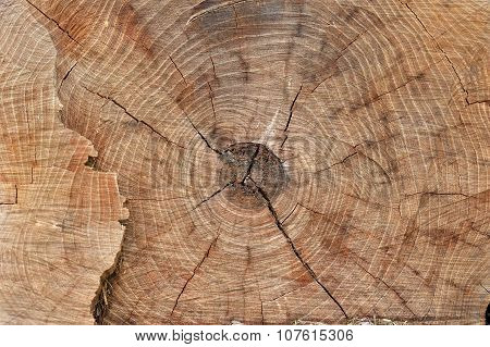 texture Stump of tree - section of the trunk with annual rings closeup
