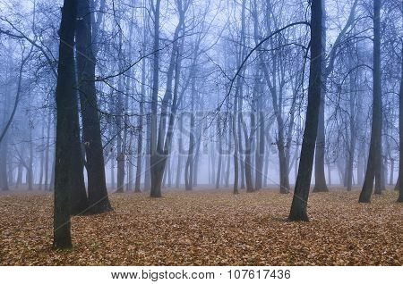 Autumn Park In Misty Weather - Autumn Landscape