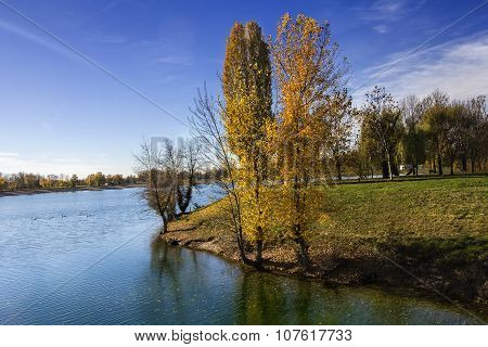 Trees Along Lake In The Autumn
