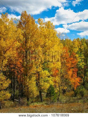 Colorful Autumn Trees In The Forest And Sunlight