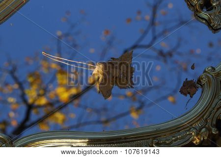 Autumn Sheet Of A Maple On A Mirror In Sky Reflexion