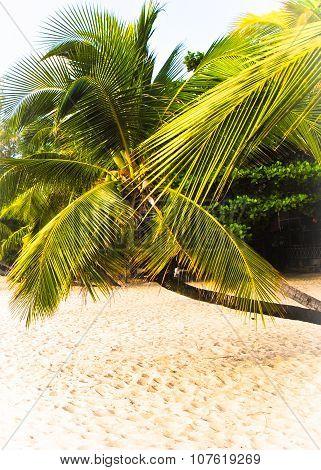Palm tree on the coast