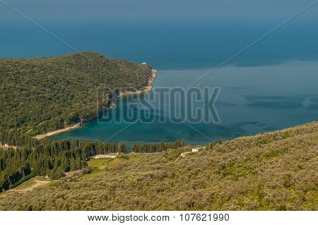 Forest and olive plantation attached to the sea