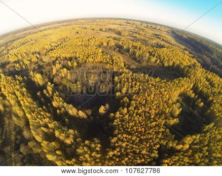 Photo of an autumn forest with a bird's eye view