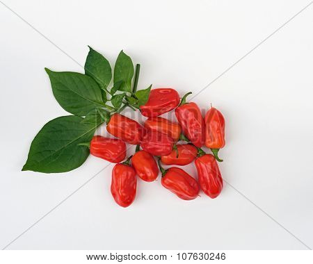 Bunch of Zavory Mild Habanero peppers