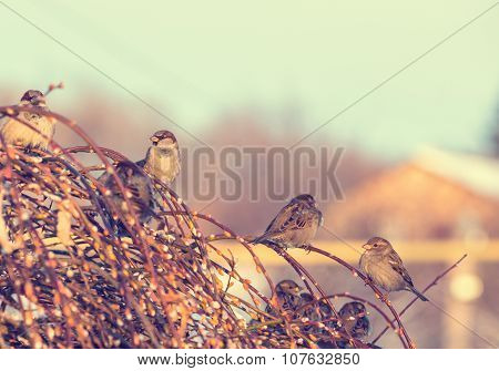 Winter shot of sparrows sitting on branch