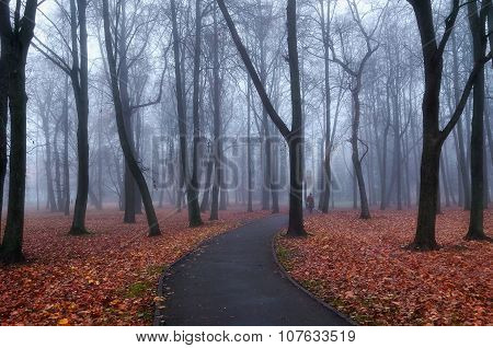 Autumn Foggy Park Alley  - Mysterious Autumn Landscape