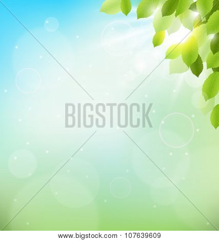 Tree Foliage With Sunlight On Sky. Floral Nature Spring