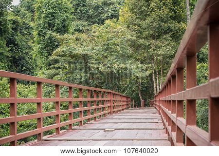 Walking Wood Bridge In The Park