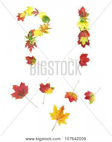 Font made of autumn leaves isolated on white. Question mark, exclamation mark and a couple of points and dots.