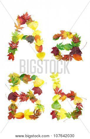 Font made of autumn leaves isolated on white. Letters a and b.