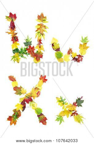 Font made of autumn leaves isolated on white. Letters w and x.
