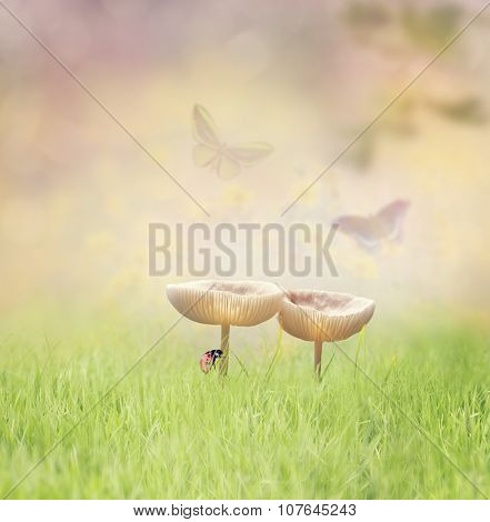 Two Wild Mushrooms in the Grass