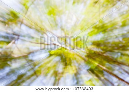 Blurred Bokeh View From Under Tree To Top In Green Forest.