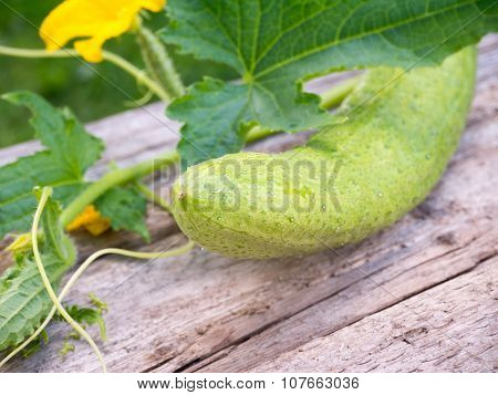Cucumber And Cucumber Flowers On The Gray Wooden Board