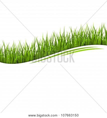 Green Grass Lawn Wave Isolated On White. Floral Eco Nature