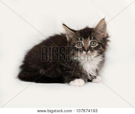 Siberian Fluffy Tabby Kitten Lies On Gray