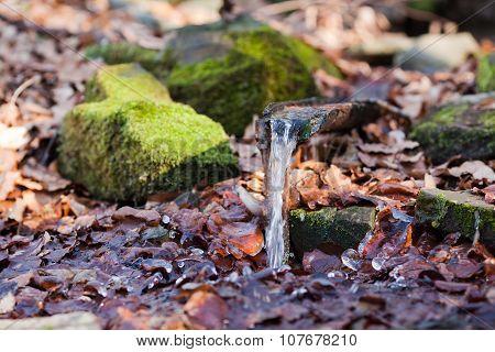 Wellspring In Winter