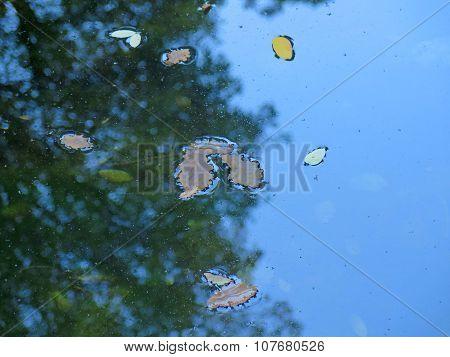 leaves water