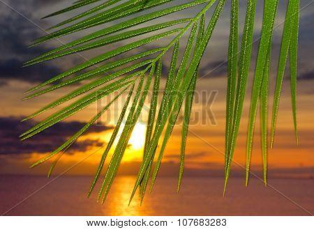 Paradise Palm Beauty