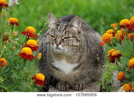 Cat among the flowers in the garden.