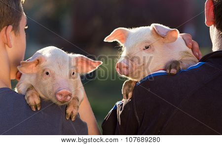 Piglets On Farmers Shoulders
