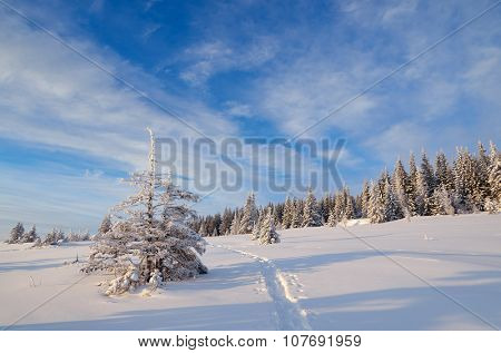 Winter landscape. Path in the snow. Sunny day. Fir forest in mountains