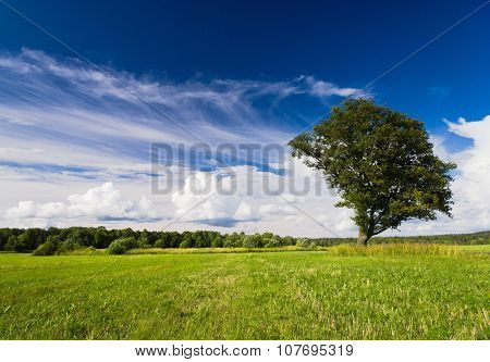 Grass Land Lonely Tree