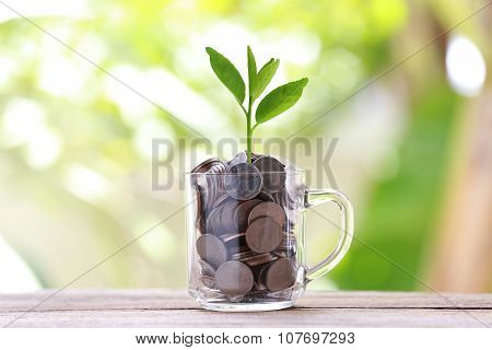 Silver Coin In Glass Is Placed On A Wood Floor And Treetop Growing.