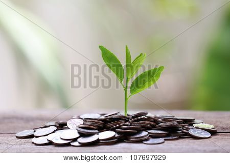 Pile Silver Coin And Treetop Growing On A Wood Floor And Colorful Bokeh Background.