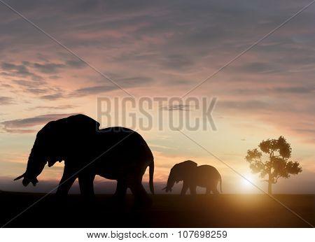Elephants in sunset