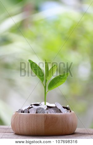 Silver Coin In Wooden Bowl Is Placed On A Wood Floor And Treetop Growing.