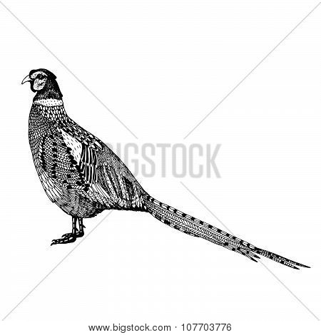 abstract hand drawn vector illustration with a pheasant isolated on a white background