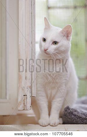 Portrait Of A White Domestic Cat