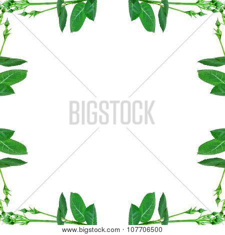 Floral Decorative Frame Background